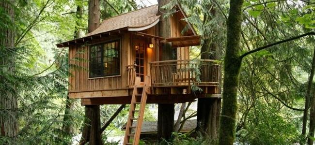 Steps to Building a Great Tree House